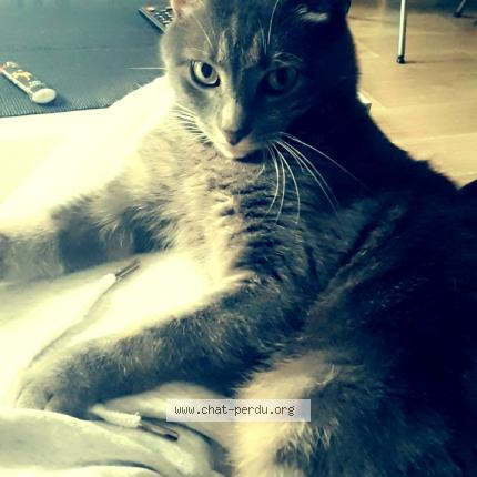 #562167 Get chat perdu à BRIE COMTE ROBERT