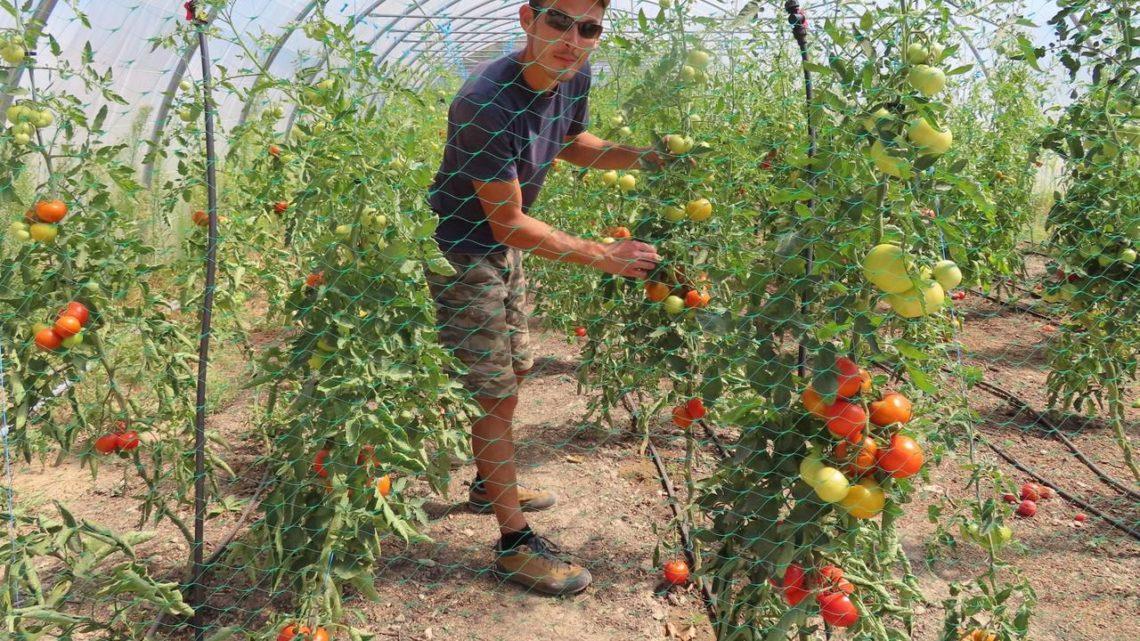 4000 hectares de plus en un an : le boom de l'agriculture bio en Ile-de-France